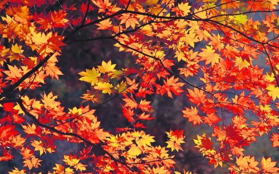 2. leaves